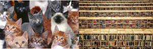 lots of cats and books