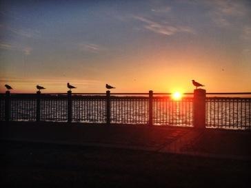 Birds on Railing at Sunrise 2