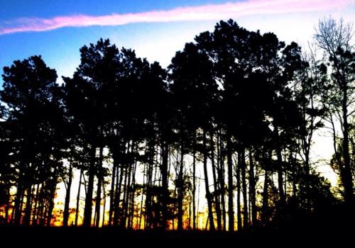 Morning Sunrise M1315