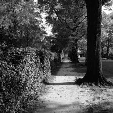 Down the Lane (B&W)