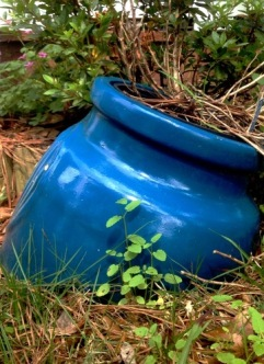 Blue Pot 1