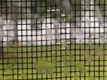 rain on window screen