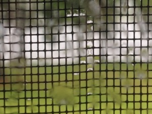 rain on window screen