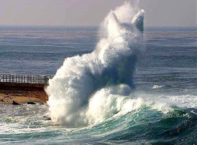 Cat in the Waves