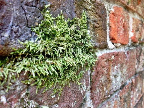 Moss Tryon Palace Brick Detail