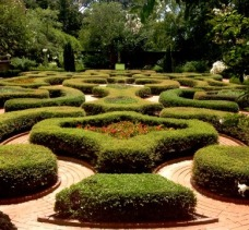 Tryon Palace maze garden 28 July 2015