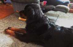 Kona the Dog