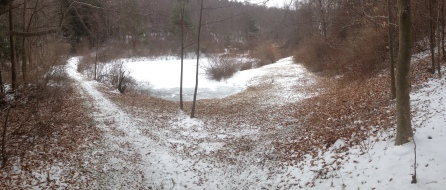 The Pond in Panorama