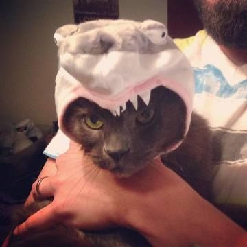 smokey-the-shark