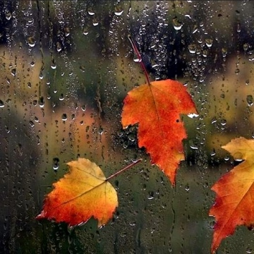 leaves-and-autumn-rain