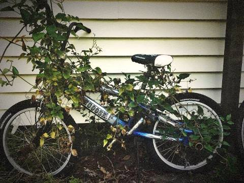 weeds overgrown bike