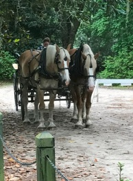 Belgian Horses at Middleton Place