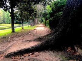 Middleton Place Pathway