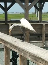 White Bird 2